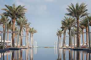 Palmen in Abu Dhabi
